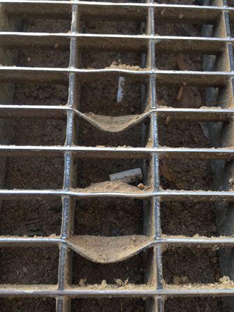 Mäuse finden ihren Weg_web